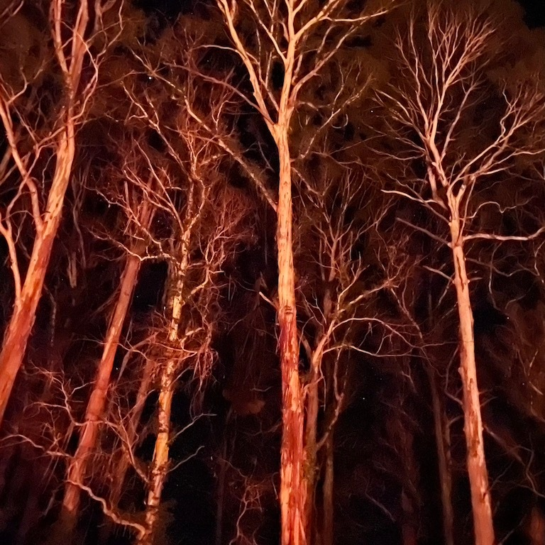 trees reflected in firelight