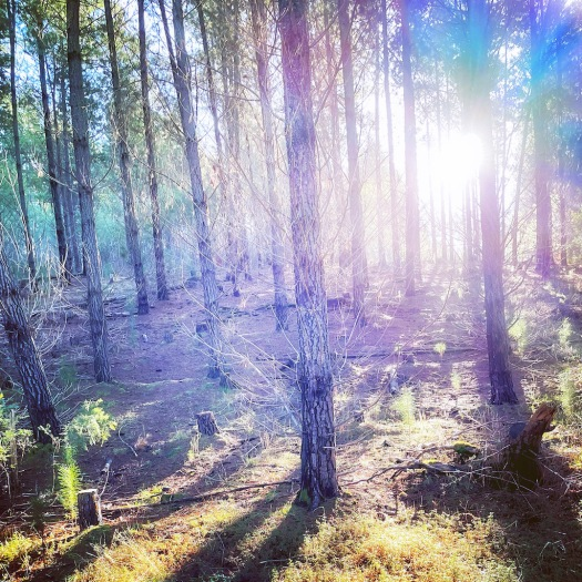 afternoon sunshine in the forest