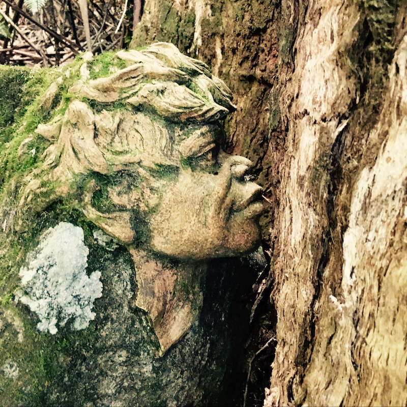Face time in a tree in Dandenong Ranges