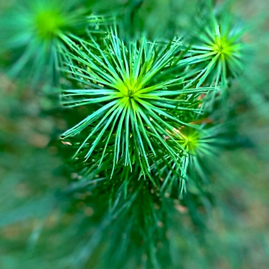 green pine tree from above