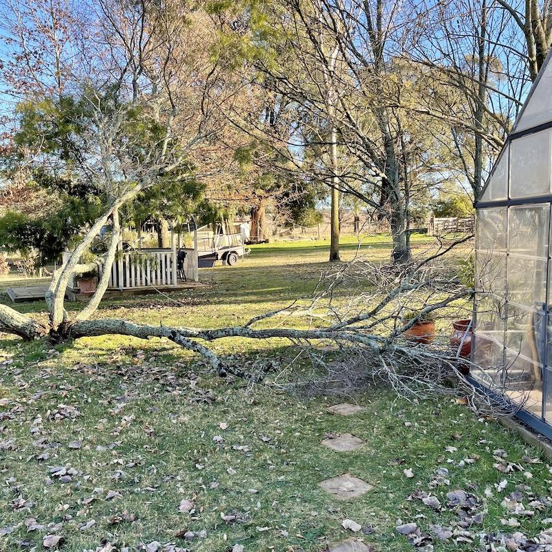 tree fall in the garden