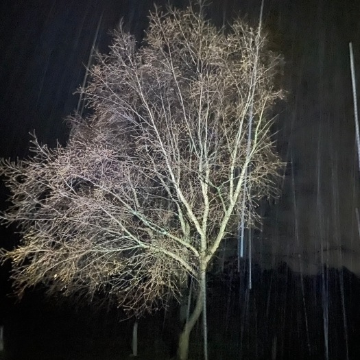 tree in the falling snow