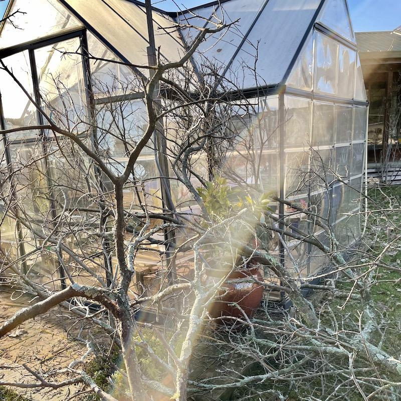 tree narrowly misses sun room