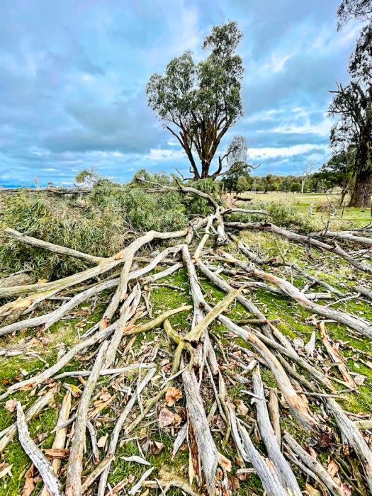 Tree falls in paddock
