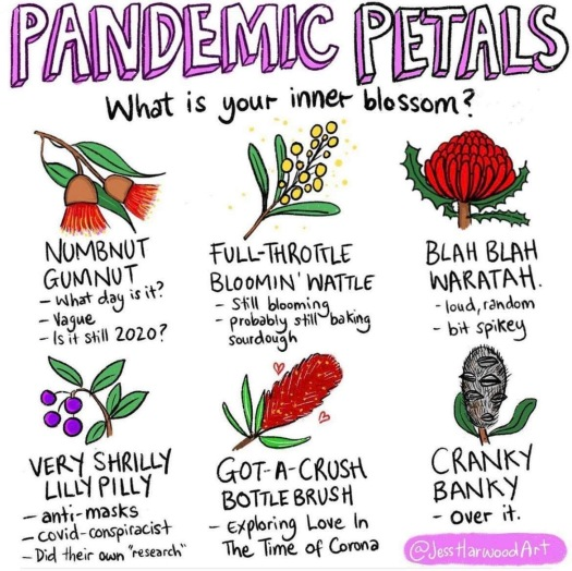 pandemic petals